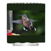 Female Anna's Hummingbird Shower Curtain