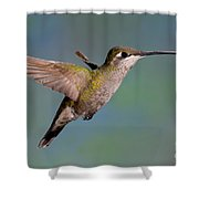 Female Magnificent Hummingbird At Flower Shower Curtain