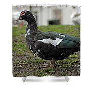 Female Muscovy Duck Shower Curtain