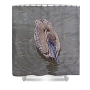 Female Pelican Shower Curtain