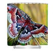 Female Promethea Moth Shower Curtain