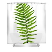 Fern Leaf Shower Curtain by Elena Elisseeva