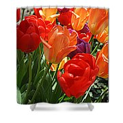 Festival Of Tulips Shower Curtain