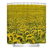 Field Of Blooming Yellow Sunflowers To Horizon Shower Curtain