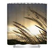 Field Of Dreams Shower Curtain by Laura Fasulo