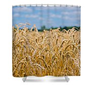 Field Of Gold Shower Curtain