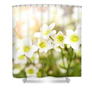 Field Of White Blossoms Shower Curtain
