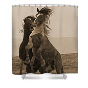 Fighting Wild Stallions Shower Curtain