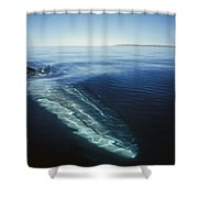 Fin Whale In Sea Of Cortez Shower Curtain