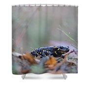 Fire Salamander - Salamandra Salamandra Shower Curtain