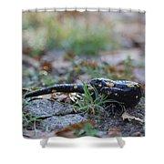 Fire Salamander Shower Curtain
