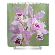 Five Beautiful Pink Orchids Shower Curtain