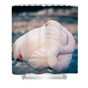 Flamingo 2b Shower Curtain