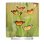 Flock Of Plain Tiger Danaus Chrysippus Shower Curtain by Alon Meir