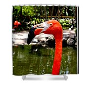 Florida Pink Flamingo Shower Curtain