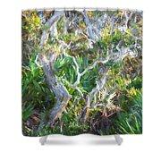 Florida Scrub Oaks Painted  Shower Curtain