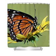 Florida Viceroy Shower Curtain