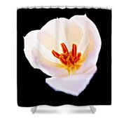 Flower 4 Shower Curtain