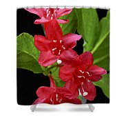 Flowers Isolated On Black Background Shower Curtain