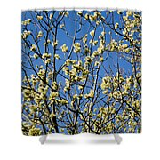Fluffy Catkins At At Tree Against Blue Sky Shower Curtain