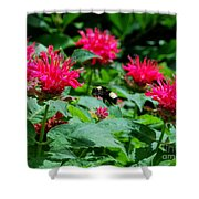 Flying Bee With Bee Balm Flowers Shower Curtain