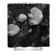 Forest Life Shower Curtain