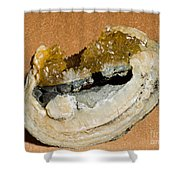Fossil Clam With Calcite Crystals Shower Curtain