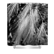 Foxtail Blowing In The Wind Shower Curtain