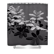 Frilly Shower Curtain