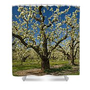 Fruit Orchard Shower Curtain