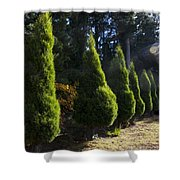 Funeral Cypress Trees Shower Curtain