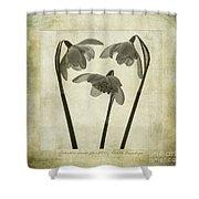 Galanthus Nivalis Flore Pleno Shower Curtain