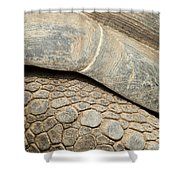 Galapagos Turtle Shower Curtain