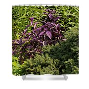 Garden Color At Woodward Park 8f Shower Curtain