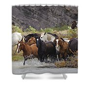 Gaucho With Herd Of Horses Shower Curtain