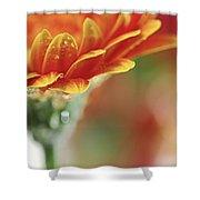 Gerbera Flower Shower Curtain