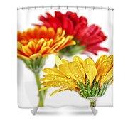 Gerbera Flowers Shower Curtain