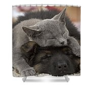 German Shepherd And Chartreux Kitten Shower Curtain