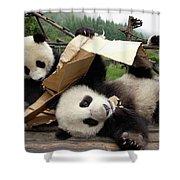 Giant Panda Ailuropoda Melanoleuca Pair Shower Curtain