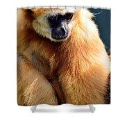 Gibbon Monkey  Shower Curtain