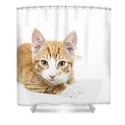 Ginger Kitten Staring Shower Curtain