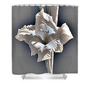 Gladiolus Named Nova Lux Shower Curtain