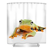 Gliding Frog Shower Curtain