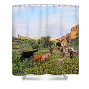 Goats In Fes In Morocco Shower Curtain
