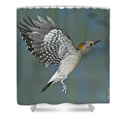 Golden-fronted Woodpecker Shower Curtain
