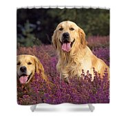 Golden Retriever Dogs In Heather Shower Curtain