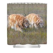 Golden Retriever Dogs On The Hunt Shower Curtain