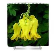 Golden Tears Vine Shower Curtain