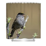 Goldencrowned Sparrow Shower Curtain
