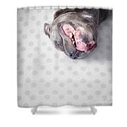 Goofy Blue Staffie Lying On His Back Shower Curtain